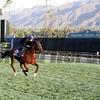 Toronado Breeders' Cup Santa Anita Park Chad B. Harmon