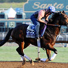 Better Lucky, Breeders' Cup October 30, 2014<br /> Dave Harmon Photo