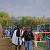 Caption:  California Chrome hotwalking with Alan Sherman<br /> Scenes at Santa Anita  on Oct. 30, 2014, in preparation for Breeders' Cup  in California.<br /> 1Origs10_30_14 image905<br /> Photo by Anne M. Eberhardt
