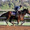 Don't Tell Sophia Breeders' Cup DIstaff Santa Anita Park Chad B. Harmon