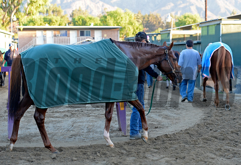 Caption:  Starspangled Heat<br /> Scenes at Santa Anita  on Oct. 29, 2014, in preparation for Breeders' Cup  in California.<br /> 1Origs10_29_14 image656<br /> Photo by Anne M. Eberhardt