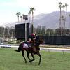 No Nay Never Breeders' Cup Santa Anita Park Chad B. Harmon