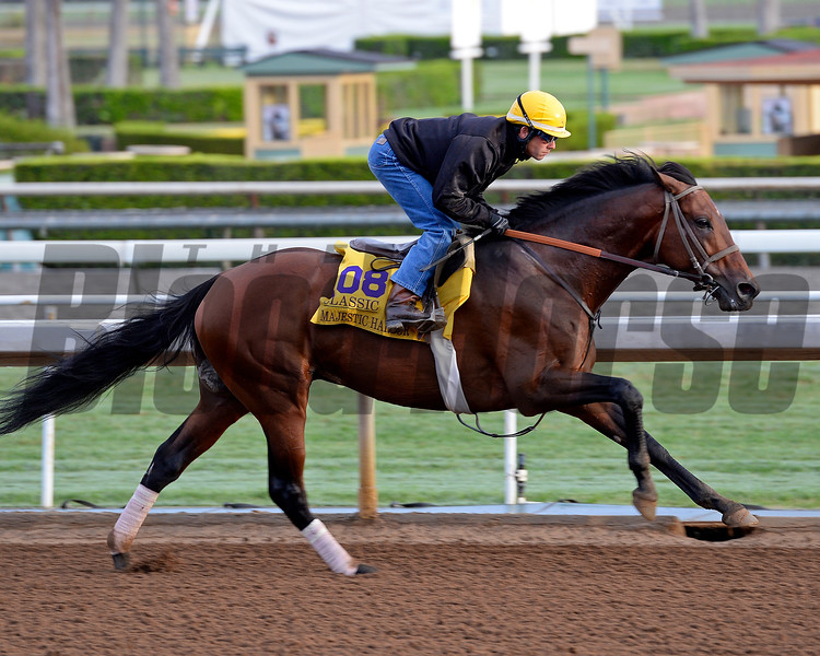 Majestic Harbor on Oct. 26, 2014, at Santa Anita in preparation for the Breeders' Cup.<br /> 2Origs10_26_14 image320<br /> Anne M. Eberhardt photo