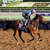 Secret Circle Breeders Cup Santa Anita Park Chad B. Harmon