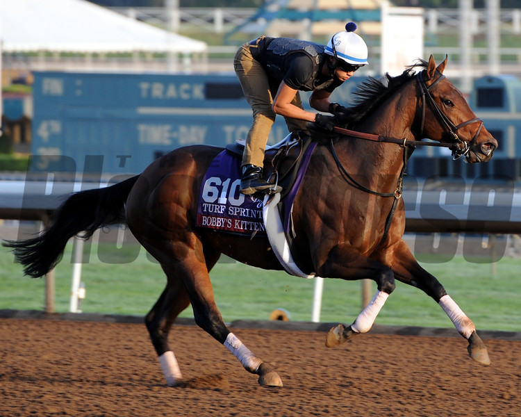 Bobby's Kitten - Breeders' Cup 2014<br /> Photo by Dave Harmon