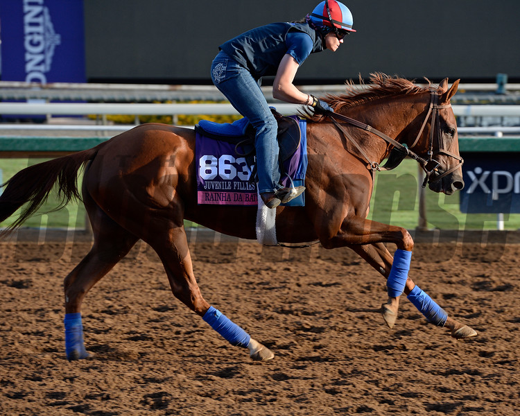 Caption:  Rainha Da Bateria<br /> Scenes at Santa Anita in preparation for Breeders' Cup  in California on Oct. 27, 2014.<br /> 1Origs10_27_14 image847<br /> Photo by Anne M. Eberhardt
