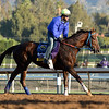 Caption:  Belle Gallantey<br /> Scenes at Santa Anita  on Oct. 27, 2014, in preparation for Breeders' Cup  in California.<br /> 1Origs10_28_14 image413<br /> Photo by Anne M. Eberhardt