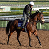 Caption:  Valiant Emilia<br /> Scenes at Santa Anita in preparation for Breeders' Cup  in California on Oct. 27, 2014.<br /> 1Origs10_27_14 image875<br /> Photo by Anne M. Eberhardt