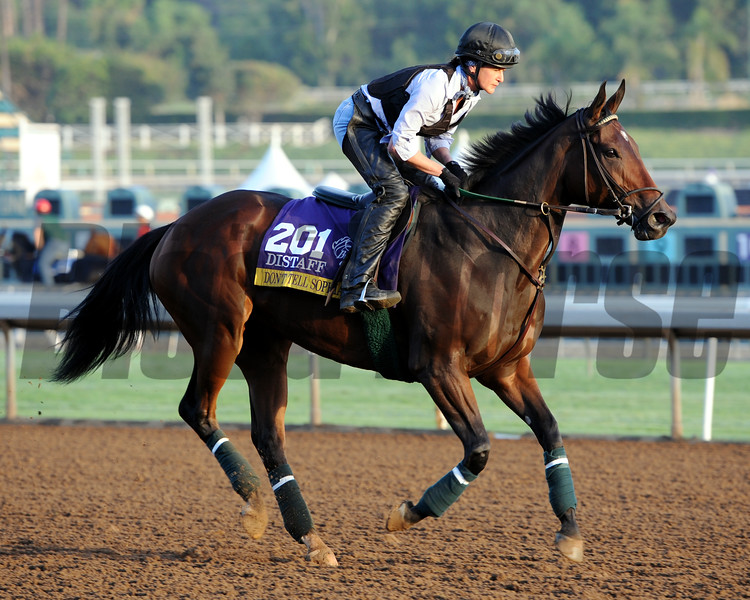 Don't Tell Sophia, Breeders' Cup 2014, Photo by Dave Harmon