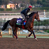 Caption:  Toronado<br /> Scenes at Santa Anita  on Oct. 27, 2014, in preparation for Breeders' Cup  in California.<br /> 1Origs10_28_14 image135<br /> Photo by Anne M. Eberhardt