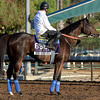 Caption:  Fed Biz<br /> Scenes at Santa Anita  on Oct. 27, 2014, in preparation for Breeders' Cup  in California.<br /> 1Origs10_28_14 image294<br /> Photo by Anne M. Eberhardt