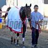 Caption:  Big Macher hotwalking<br /> Scenes at Santa Anita  on Oct. 29, 2014, in preparation for Breeders' Cup  in California.<br /> 1Origs10_29_14 image783<br /> Photo by Anne M. Eberhardt