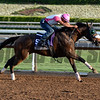 Caption:  Sweet Reason<br /> Scenes at Santa Anita in preparation for Breeders' Cup  in California on Oct. 27, 2014.<br /> 1Origs10_27_14 image821<br /> Photo by Anne M. Eberhardt