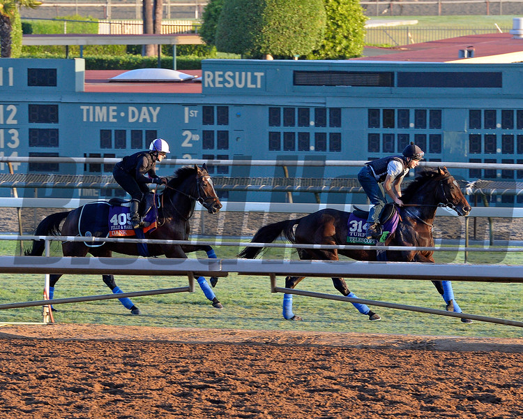 Caption:  r-l, Telescope followed by Dank<br /> Scenes at Santa Anita  on Oct. 27, 2014, in preparation for Breeders' Cup  in California.<br /> 1Origs10_28_14 image223<br /> Photo by Anne M. Eberhardt