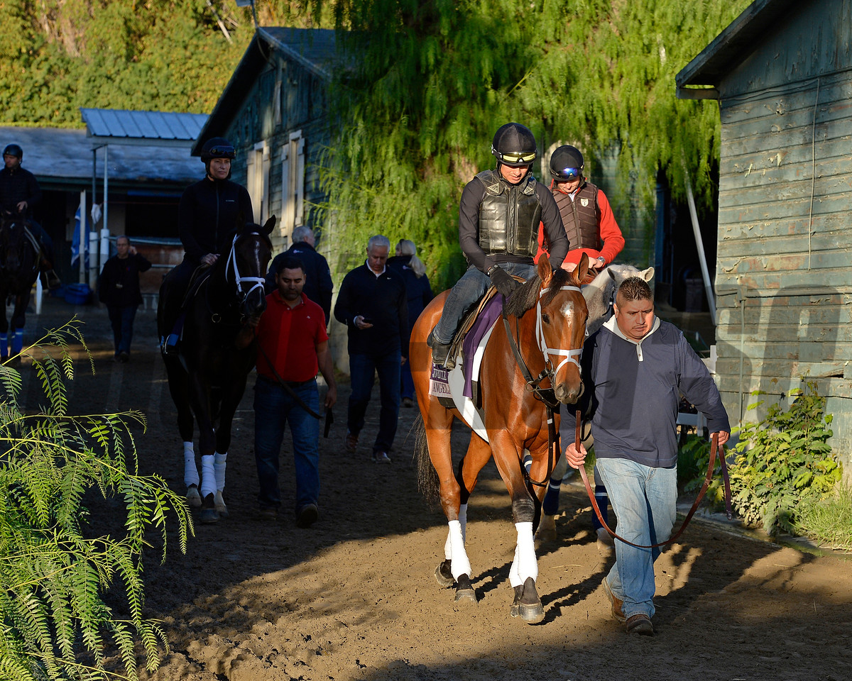 Caption:  Angela Renee and other Pletcher horses walk to the track.<br /> Scenes at Santa Anita  on Oct. 29, 2014, in preparation for Breeders' Cup  in California.<br /> 1Origs10_29_14 image680<br /> Photo by Anne M. Eberhardt