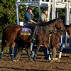 Caption:  Don't Tell Sophia goes to the track.<br /> Scenes at Santa Anita  on Oct. 28, 2014, in preparation for Breeders' Cup  in California.<br /> 1Origs10_28_14 image287<br /> Photo by Anne M. Eberhardt