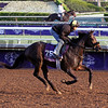 By the Moon Breeders' Cup Santa Anita Park Chad B. Harmon