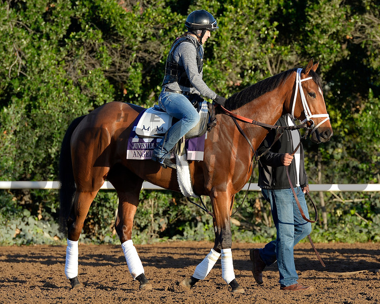 Caption:  Angela Renee<br /> Scenes at Santa Anita  on Oct. 27, 2014, in preparation for Breeders' Cup  in California.<br /> 1Origs10_28_14 image283<br /> Photo by Anne M. Eberhardt