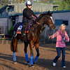 Caption:  Dank<br /> Scenes at Santa Anita  on Oct. 27, 2014, in preparation for Breeders' Cup  in California.<br /> 1Origs10_28_14 image193<br /> Photo by Anne M. Eberhardt