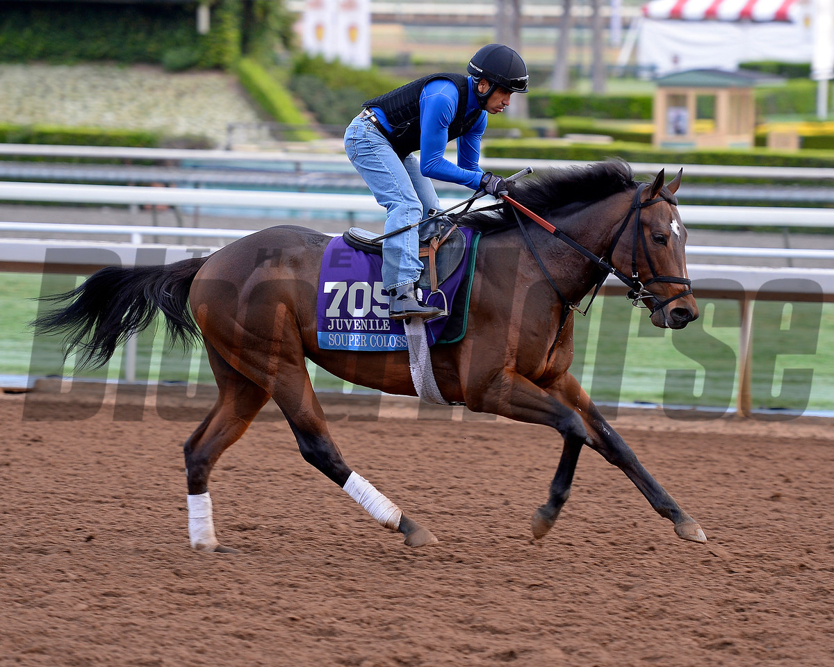 Souper Colossal on Oct. 26, 2014, at Santa Anita in preparation for the Breeders' Cup.<br /> 2Origs10_26_14 image472<br /> Anne M. Eberhardt photo