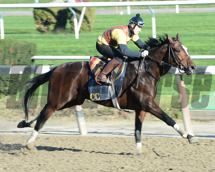Tonalist preps for the Breeders' Cup Classic, Belmont Park, October 25, 2014<br /> Coglianese Photos/Susie Raisher