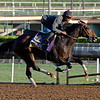 Caption:  Iotapa<br /> Scenes at Santa Anita  on Oct. 27, 2014, in preparation for Breeders' Cup  in California.<br /> 1Origs10_28_14 image357<br /> Photo by Anne M. Eberhardt