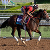 Caption:  Conquest Typhoon<br /> Scenes at Santa Anita in preparation for Breeders' Cup  in California on Oct. 27, 2014.<br /> 1Origs10_27_14 image745<br /> Photo by Anne M. Eberhardt