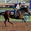 Caption:  Don't Tell Sophia<br /> Scenes at Santa Anita in preparation for Breeders' Cup  in California on Oct. 27, 2014.<br /> 1Origs10_27_14 image845<br /> Photo by Anne M. Eberhardt