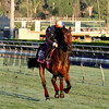 Osaila Breeders' Cup Santa Anita Park Chad B. Harmon