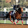 Goldencents Breeders' Cup Dirt Mile Chad B. Harmon Santa Anita Park