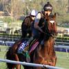 Telescope Breeders' Cup Santa Anita Park Chad B. Harmon