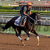 Pants on Fire on Oct. 26, 2014, at Santa Anita in preparation for the Breeders' Cup.<br /> Anne M. Eberhardt photo
