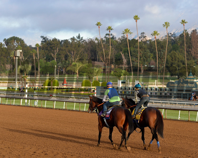 Secret Circle, left, and Bayern return to barn area after works for Bob Baffert on Oct. 26, 2014, at Santa Anita in preparation for the Breeders' Cup.<br /> Anne M. Eberhardt photo