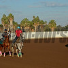 California Chrome with Victor Espinoza prepares to work at Los Alamitos Racetrack in California on Oct. 25, 2014. image 5059<br /> Anne M. Eberhardt photo