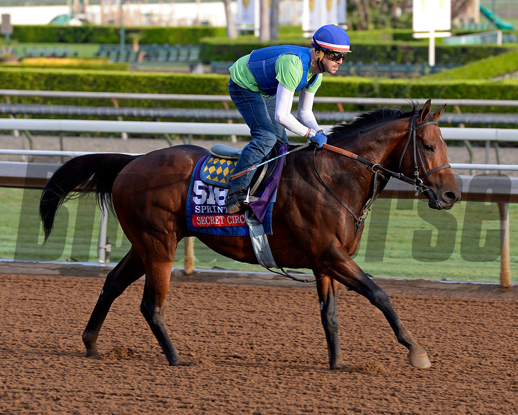 Secret Circle in Sprint for Bob Baffert on Oct. 26, 2014, at Santa Anita in preparation for the Breeders' Cup.<br /> 2Origs10_26_14 image378<br /> Anne M. Eberhardt photo