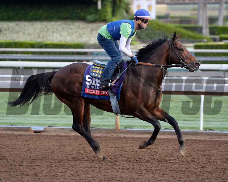 Secret Circle for Bob Baffert on Oct. 26, 2014, at Santa Anita in preparation for the Breeders' Cup.<br /> 2Origs10_26_14 image317<br /> Anne M. Eberhardt photo