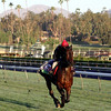 Trade Storm Breeders' Cup Santa Anita Park Chad B. Harmon