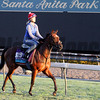 Wet Sail Breeders' Cup Santa Anita Park Chad B. Harmon
