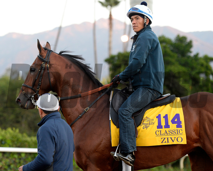 Caption:  Zivo<br /> Scenes at Santa Anita  on Oct. 27, 2014, in preparation for Breeders' Cup  in California.<br /> 1Origs10_28_14 image121<br /> Photo by Anne M. Eberhardt