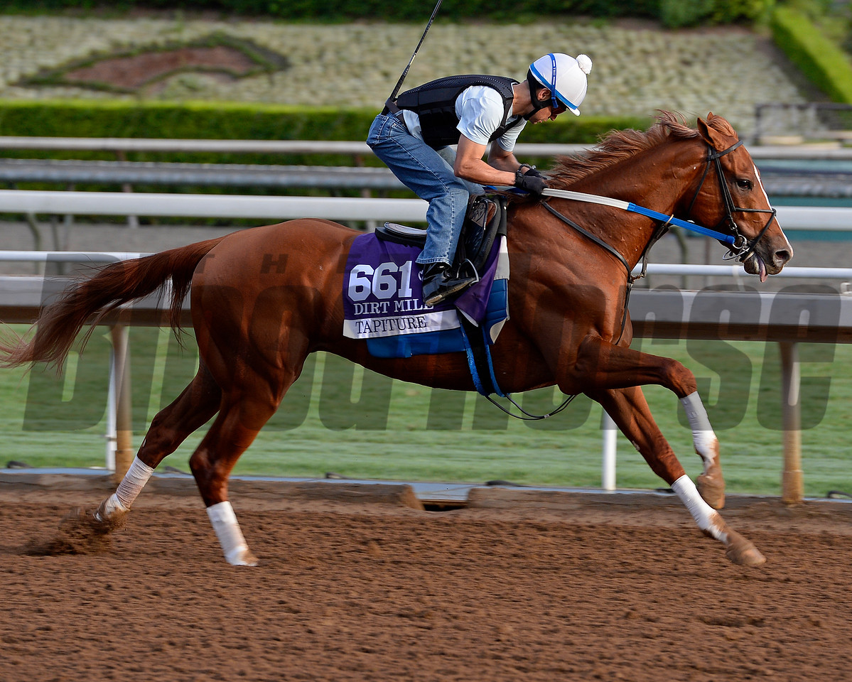 Tapiture  on Oct. 26, 2014, at Santa Anita in preparation for the Breeders' Cup.<br /> Anne M. Eberhardt photo