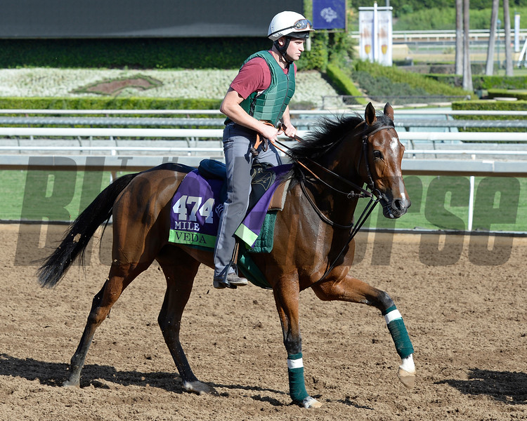 Caption:  Vida<br /> Scenes at Santa Anita in preparation for Breeders' Cup  in California on Oct. 27, 2014.<br /> 2Origs10_27_14 image030<br /> Photo by Anne M. Eberhardt