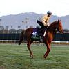 Mustajeeb Breeders' Cup Santa Anita Park Chad B. Harmon