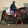 Caption:  Anodin trained by Fred Head.<br /> Scenes at Santa Anita  on Oct. 29, 2014, in preparation for Breeders' Cup  in California.<br /> 1Origs10_29_14 image761<br /> Photo by Anne M. Eberhardt