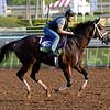 Sayaad <br /> Santa Anita image 712