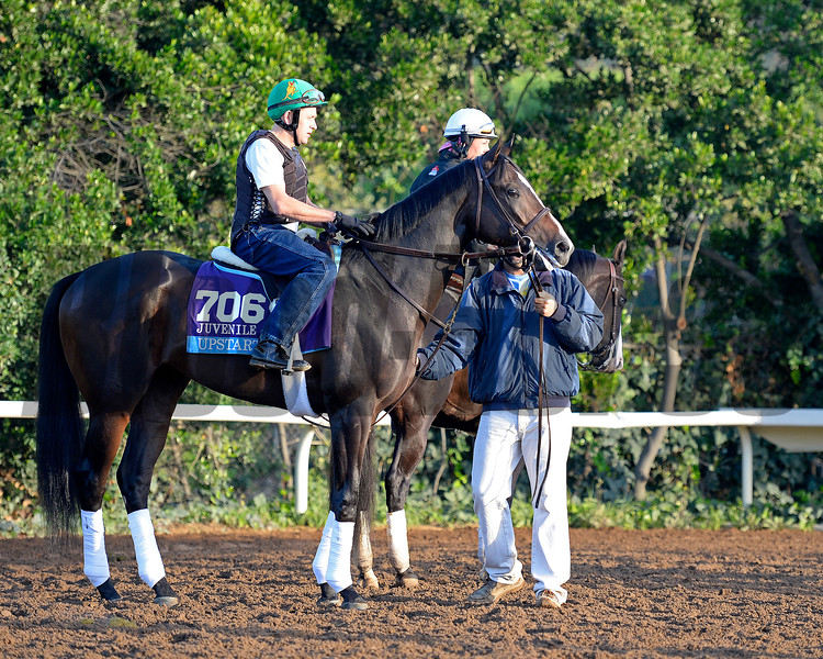 Caption:  Upstart<br /> Scenes at Santa Anita  on Oct. 30, 2014, in preparation for Breeders' Cup  in California.<br /> 1Origs10_30_14 image005<br /> Photo by Anne M. Eberhardt