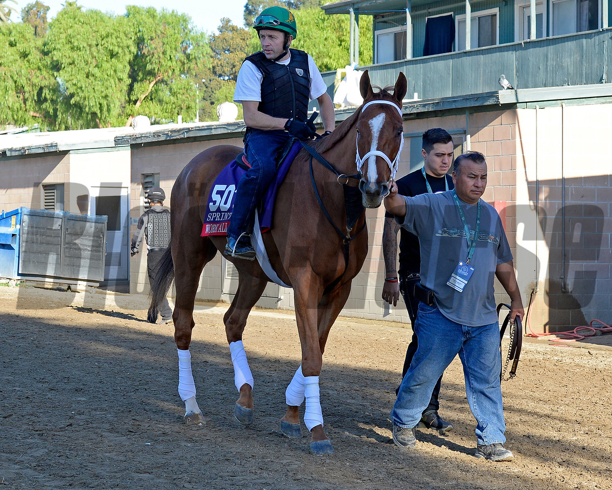 Caption:  Work All Week<br /> Scenes at Santa Anita  on Oct. 29, 2014, in preparation for Breeders' Cup  in California.<br /> 1Origs10_29_14 image864<br /> Photo by Anne M. Eberhardt