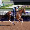 Top Decile Breeders' Cup Santa Anita Park Chad B. Harmon