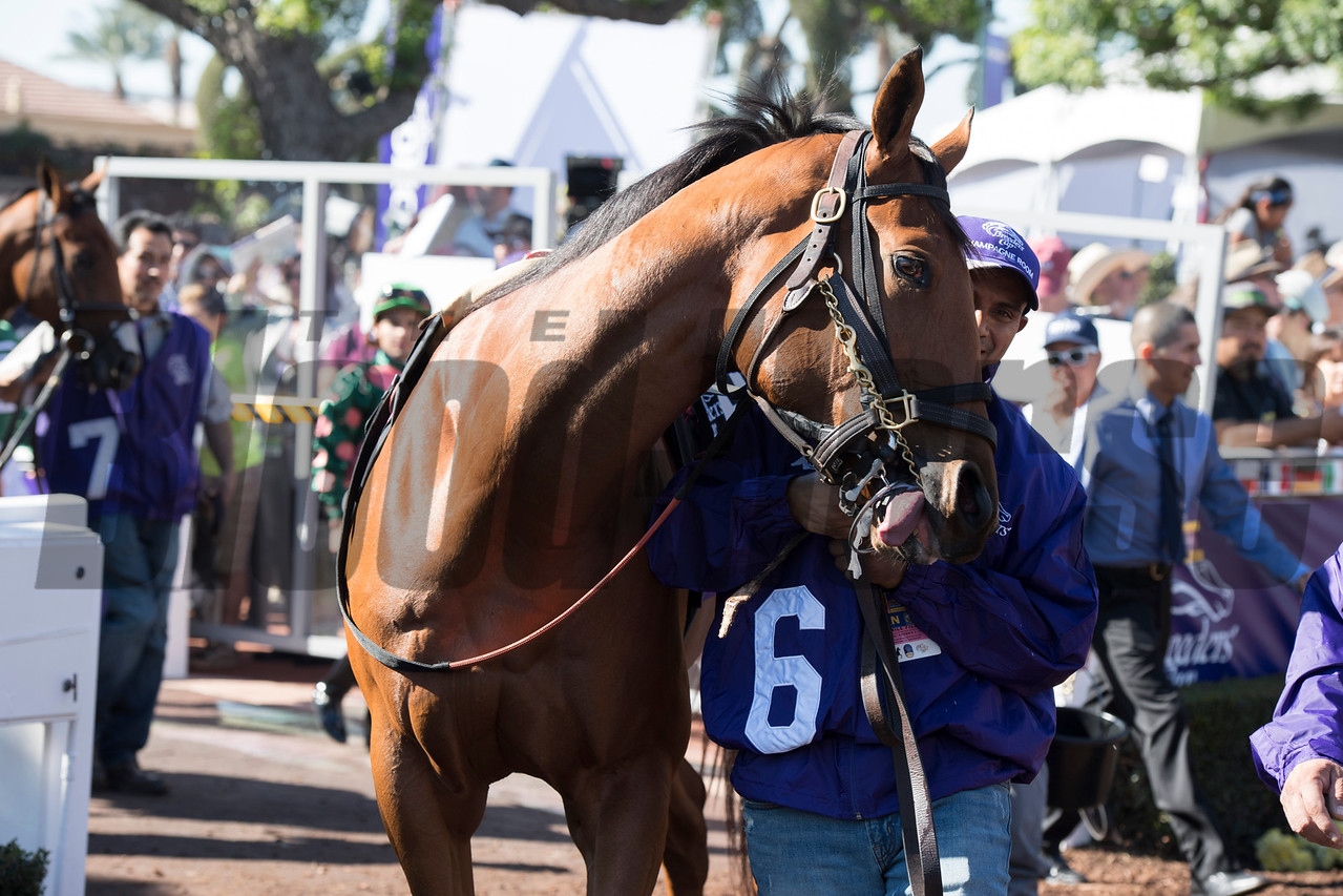 Champagne Room before winning the 14 Hands Winery Juvenile Fillies (gr. I) at Santa Anita on Nov. 5, 2016, in Arcadia, California.