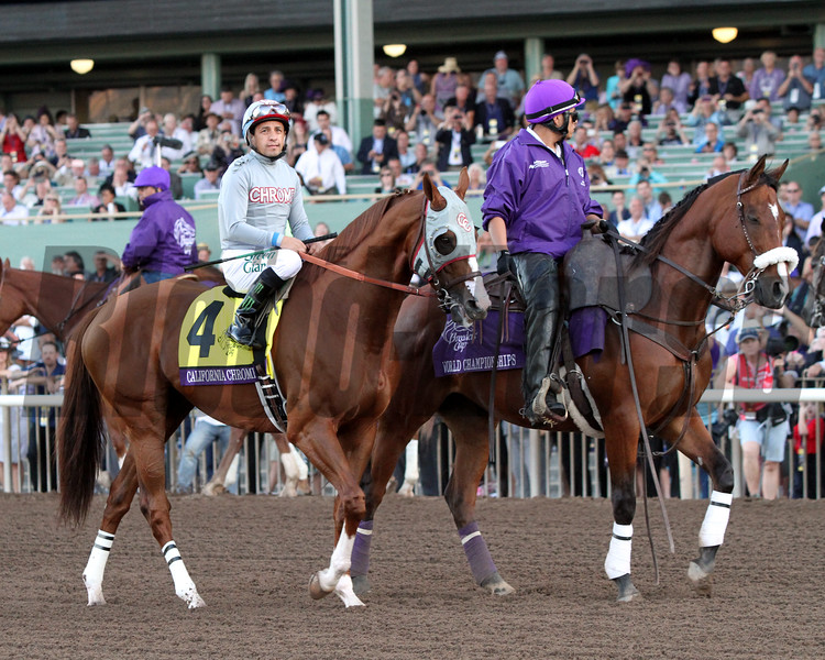 California Chrome Post Parade Breeders' Cup Classic Chad B. Harmon