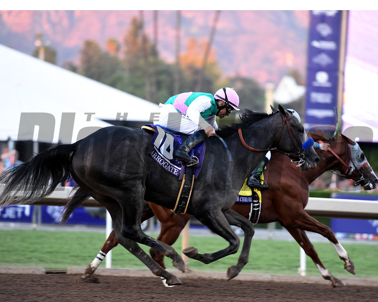 Arrogate wins the 2016 Breeders' Cup Classic   <br /> Dave Harmon Photo